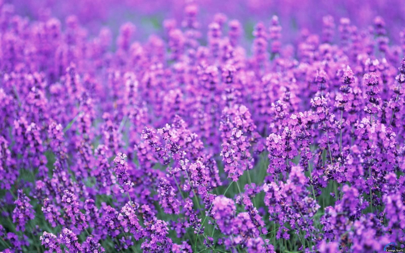 Растения/Цветы.